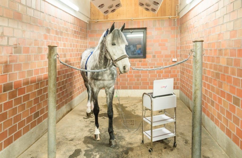 Behandlung von Pferden mit FSM - TimeWaver Horse Edition | Pferdesport